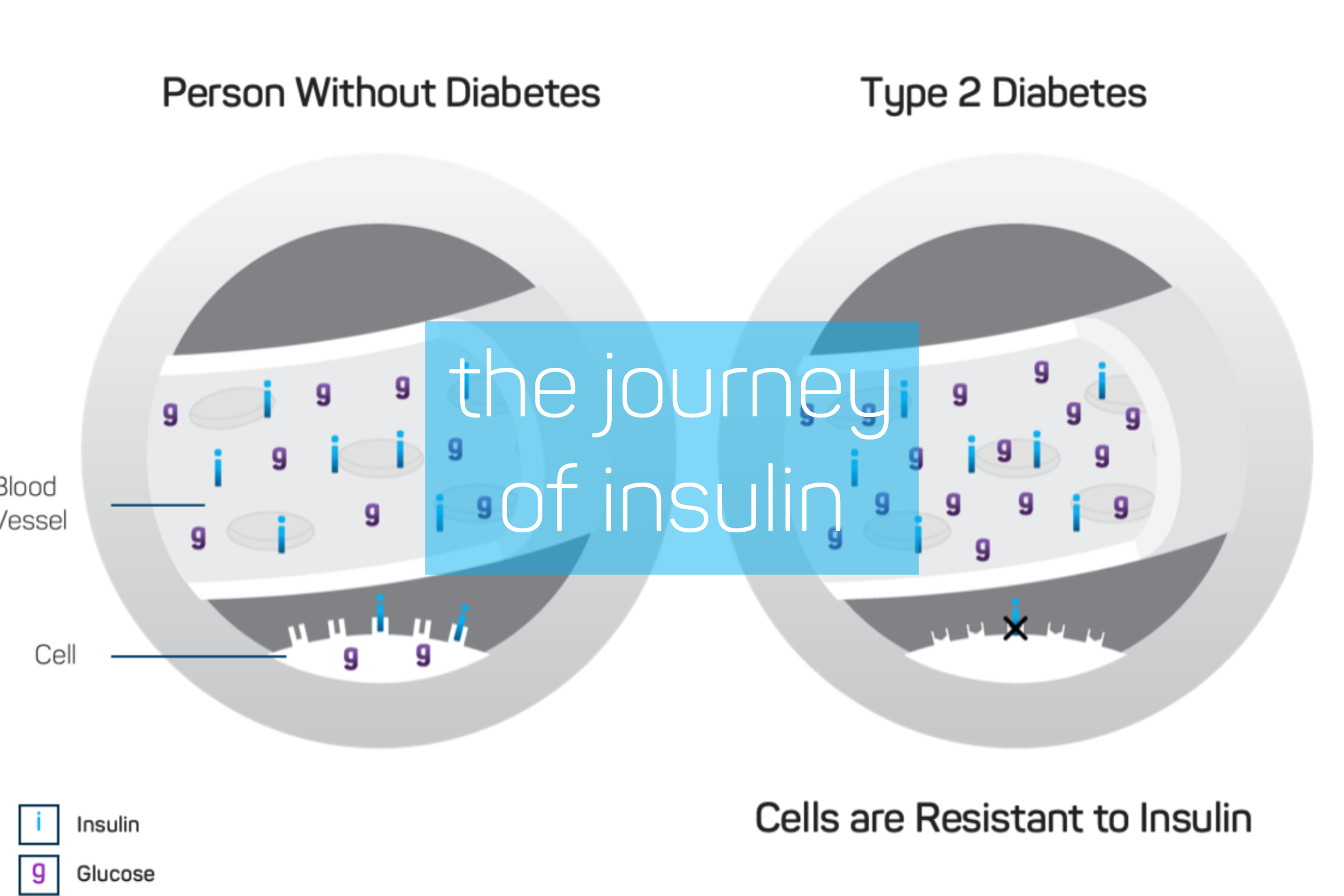 Blog_ Journey of Insulin